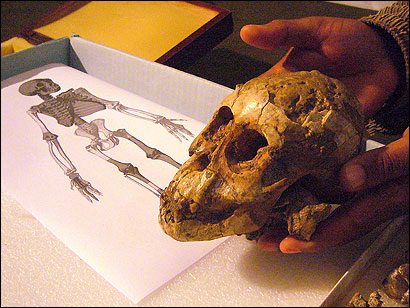 Zeresenay Alemseged, leader of an international research team, held the skull of a hominid child who died 3.3 million years ago. The discovery in an Ethiopian desert represents one of the most complete ancient individuals ever recovered and the oldest.