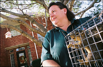 Animal control officer Sherry Smith last week handled a call to capture a squirrel loose in a pantry in Plano, Texas. The city is now building to its outer edges, encroaching on one of the few remaining habitats for wildlife.