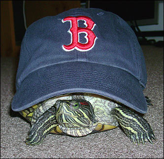 Your Red Sox pets