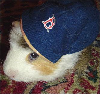 Red Sox pets