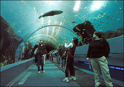 The aquarium in Atlanta has hammerhead sharks, Beluga whales, and a 350-seat food court.