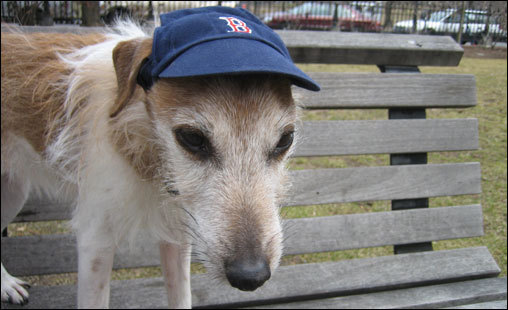 Owner Robert Perron says Milo is waiting for The Red Sox. He is a big fan!