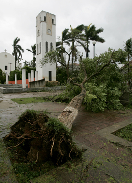 A tree was ripped out at a square in Felipe Carrillo Puerto in southeastern Mexico today.