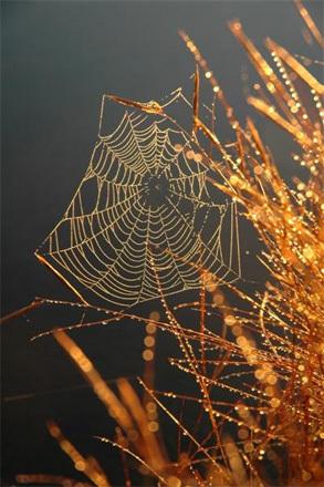 Shimmering Web.
