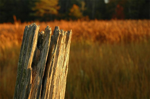 Weathered Fence Post.