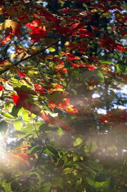 Misty Foliage.