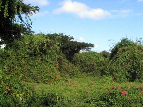 more sugar cane plantation ruins