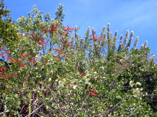 flora and cactus above our white sand beach