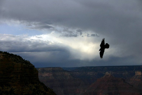 Flying solo in the Grand Canyon.