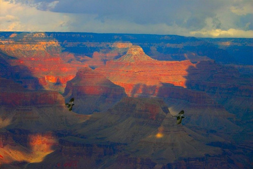 Two ravens in the Grand Canyon.