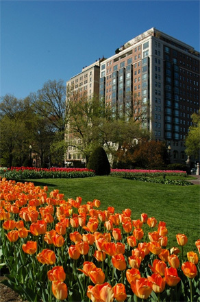 Flowers in Boston Common.