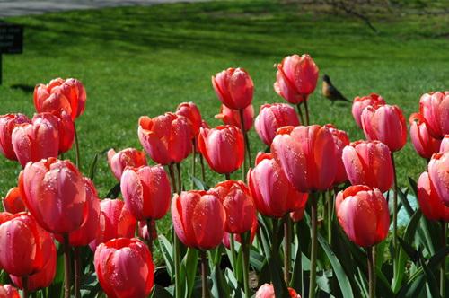 Flowers in Boston Common.