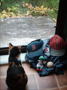 Ronn Hart submitted this photo of his kitten showing the family's Red Sox pride amid some mean thunderstorms.