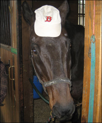 Eleven-year-old Alana Leslie sent in this photograph of her horse, CE , from Cutter Farm near Winchester, Massachusetts, where they were about to take a victory gallop in honor of the Sox's big day.