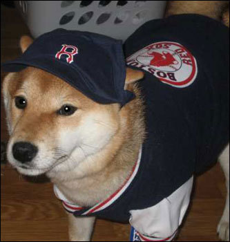 Lanna Chan of Randolph, Massachusetts, took this one of a nicely decked out Nyla , a seven-month-old Shiba Inu.