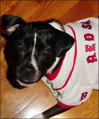 Coco from Worcester was proud to sport her Red Sox gear for the game! Her photograph has reached us courtesy of Erin Doyle.