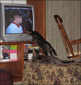 Kittens Cuddles and Wishbone took quite an interest in watching the Sox's winning streak, wrote Robert and Julie Watson who sent in the photograph from Harrisburg, Pennsylvania.