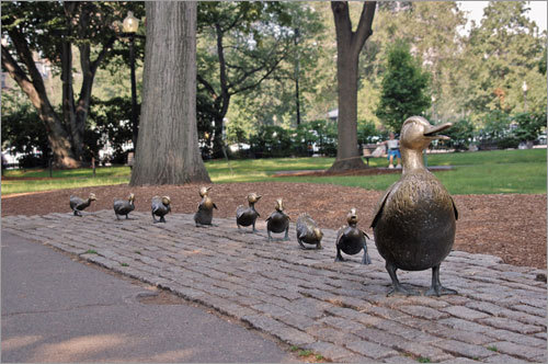Bronze duck statues line up in Boston Common. Submit your Boston photos