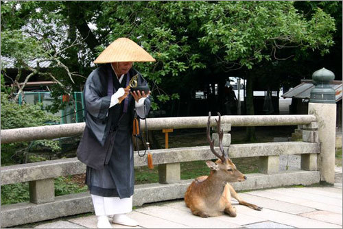A monk prays near Todaiji Temple. The deer is one of several hundreds that roam free in the park.