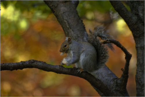 While taking photos on Thanksgiving, one reader spotted this squirrel hiding on a tree limb.