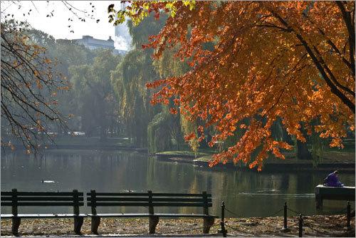 Orange leaves fall in Boston Common in late November.