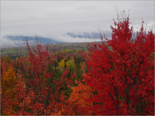 On a recent trip to Rangeley, Maine, one reader snapped this photo of a mountainside covered in red leaves.