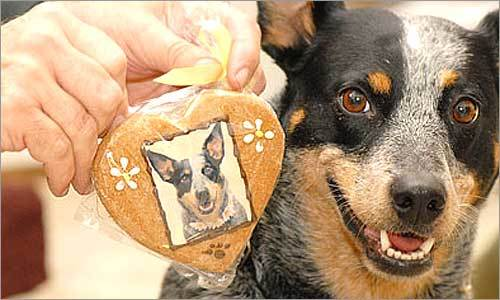 Doggie Photo Treats
