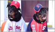 Red Sox pets