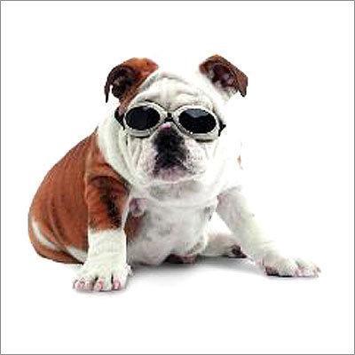 Dog Doggles