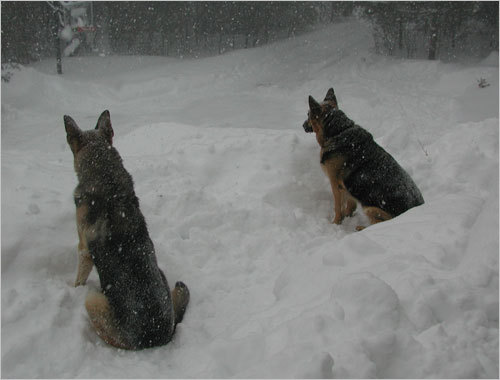 Gento and his brother Max waiting for the kids to come in from playing in the snow.