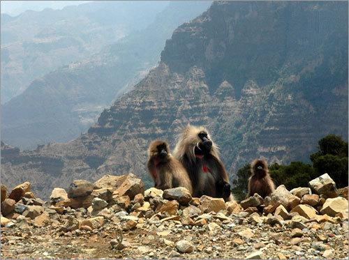 where they went: ethiopia