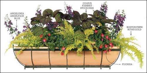 Dress up your window with spikes of dark-purple angelonia backed by purple coleus speckled with green, a chartreuse Boston fern, and two-toned fuchsia all nestled in a copper window box. 'The colors off set the copper well,' says Hohmann. 'This arrangement would work for almost any home.'
