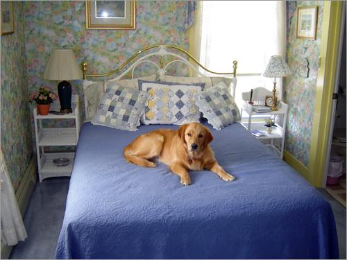 Lazy Dog Inn
