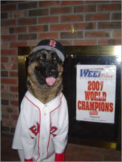 Diva the German Shepherd is all suited up for a win! This photo, taken after the rolling rally in Boston, shows Diva, full name Nikirees Genies, in all her Red Sox glory.