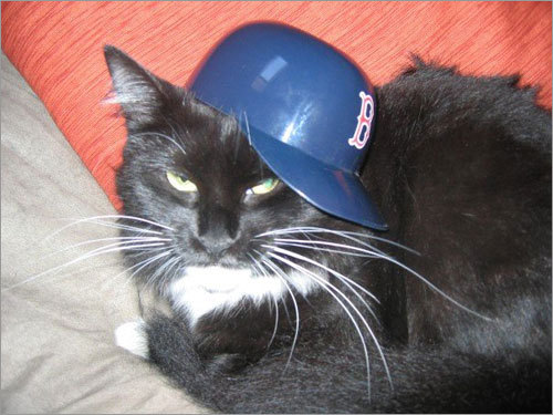 Living in Brooklyn being a Red Sox fan is not easy. Even for Bella, this two year old cat.