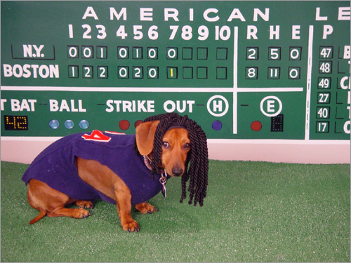 West Roxbury pup Fenway is just 'being Manny' in front of this recreation of the Green Monster.
