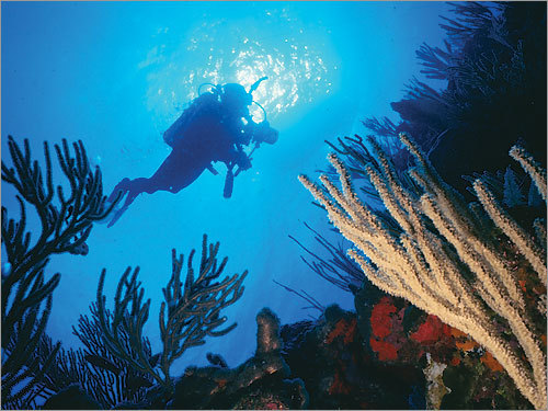 Because of its clear water, Puerto Rico is a haven for scuba-diving enthusiasts.