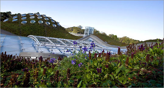 The California Academy of Sciences has a 2 1/2-acre living roof of plants and a piazza (above) whose glass ceiling can be cranked open.
