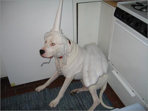 Your Halloween Pet Photos Gallery Three Boston Com