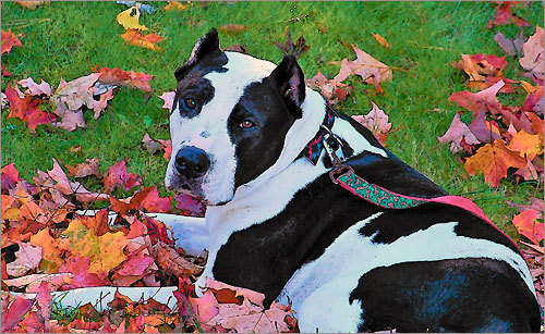 your fall pet photos