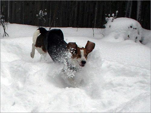 your winter pet photos