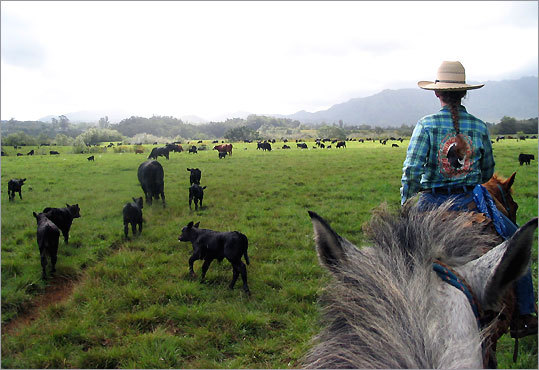 Princeville Ranch offers cattle drives and an hour's meander along an ocean bluff.