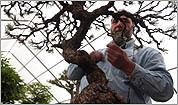 Expert bonsai gardener