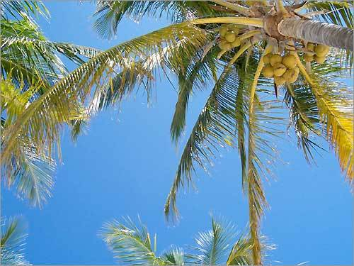 Taken at the beach in Freeport, Bahamas while sitting in a lounge chair one perfect afternoon.