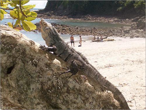 'All species sun worship in Manuel Antonio National Park, Costa Rica!'