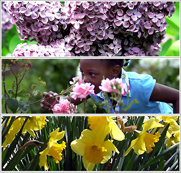 Spring flowers festivals in new england boston fall foliage gets all the attention here in new england but we confess that some mightylinksfo