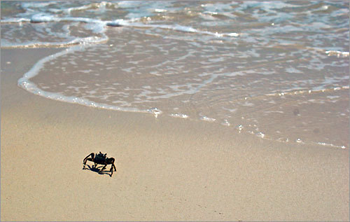 A crab made its way back to the ocean.