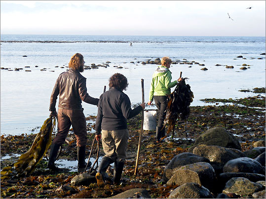 Diane Bernard leads a tour on a seaweed gathering expedition - it's her business - on Vancouver Island, B.C.