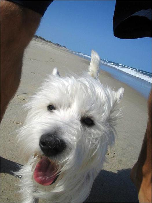 your summer pet photos