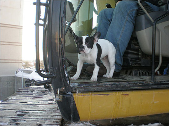 Readers submitted their photos of dogs at work on Take Your Dog to Work Day in 2009. If you've taken your pooch to the office and captured it on camera, send us the photo . In 2009, Melissa Brodeur sent this shot of Ike the dog joining 'Uncle Bry' on an excavator as they back-filled a retaining wall.